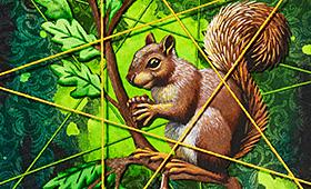 Planning- Capricorn, Squirrel & Oak